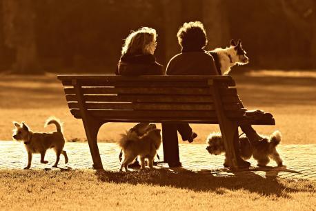 El Plenu refuga crear una tasa pa los dueños de perros