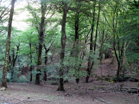 L'espaciu forestal asturianu na conferecia mensual d'Ástura